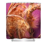 Oleander Seed Pods Shower Curtain