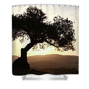 Olive At Sunset Shower Curtain