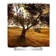 Olive Tree Dawn Shower Curtain