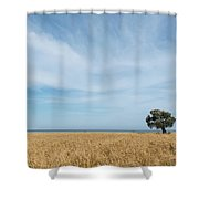 Olive Tree On The Wheat Field  Shower Curtain