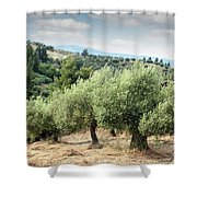 Olive Trees Hill Shower Curtain