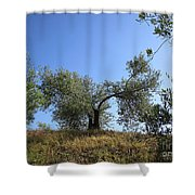 Olive Trees Near Olvera Shower Curtain