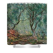 Olive Trees In The Moreno Garden Shower Curtain