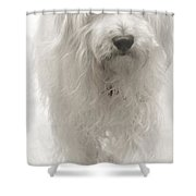 Oliver... Shower Curtain