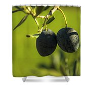 Olives #1 Shower Curtain