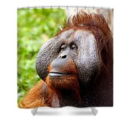 Ollie The Orangutang Shower Curtain