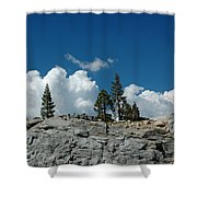 Olmsted Point Pine Rear View Shower Curtain