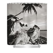 Olowalu Driftwood Shower Curtain