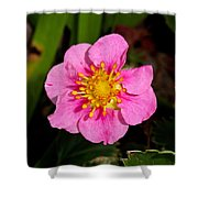 Olympia Pink Shower Curtain