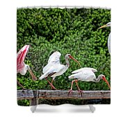 Olympic Team Tryouts Shower Curtain