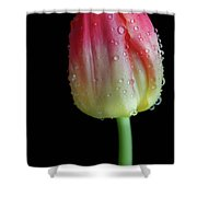 Ombre Sunrise Shower Curtain by Tracy Hall