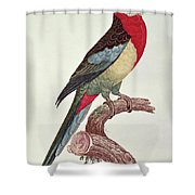 Omnicolored Parakeet Shower Curtain
