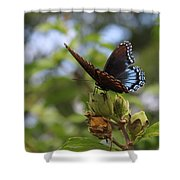 On Blue Wings Shower Curtain