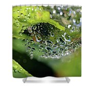 On Drops Of Dew Shower Curtain