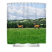On The Alert. Shower Curtain