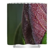 On The Path To Bloom Shower Curtain