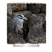 On The Rocks - Yellow-crowned Night Heron Shower Curtain