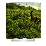 Among The Golden Rod Shower Curtain