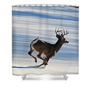 On The Run Shower Curtain by Todd Hostetter