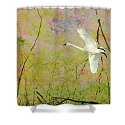 On The Wing Shower Curtain by Belinda Greb