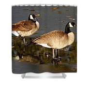 On Thin Ice Shower Curtain