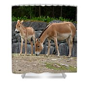 Onager  Shower Curtain