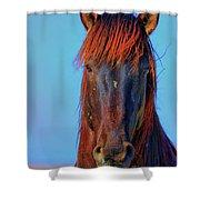 Onaqui Wild Stallion Portrait Shower Curtain