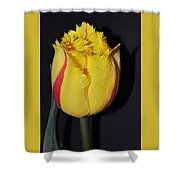 Once Again Spring Shower Curtain