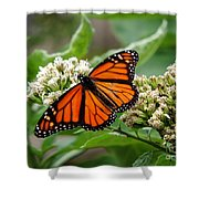 Once Upon A Butterfly 001 Shower Curtain