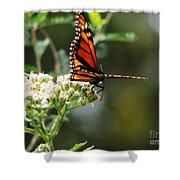 Once Upon A Butterfly 006 Shower Curtain