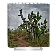 Once Was 10633 Shower Curtain