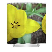 One And A Half Yellow Tulips Shower Curtain