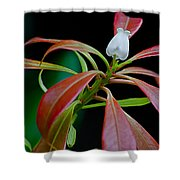 One Andromeda Shower Curtain