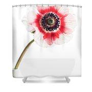 One Anemone Shower Curtain