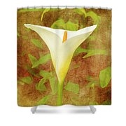 One Arum Lily Shower Curtain