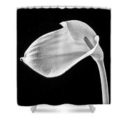 One Beautiful Calla Lily In Black And White Shower Curtain