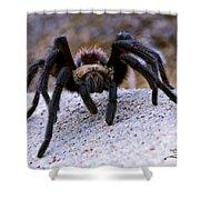 One Big Hairy Spider Shower Curtain