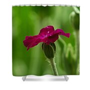 One Blossom Shower Curtain