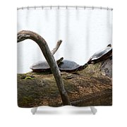 One Hiding Turtle Shower Curtain
