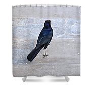 One If By Land Shower Curtain