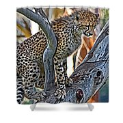 One Little Cheetah Sitting In A Tree Shower Curtain