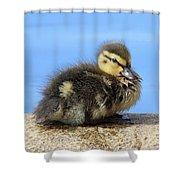 One Little Duckling Shower Curtain