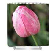 One Lovely Pink Tulip Shower Curtain