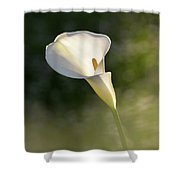 One. Shower Curtain
