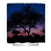 Evening In Rajasthan Shower Curtain