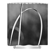 One Note Shower Curtain