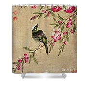 One Of A Series Of Paintings Of Birds And Fruit, Late 19th Century Shower Curtain