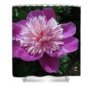 One Of My Favorite Flowers Shower Curtain