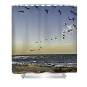 One Pelican Two Pelican Three Pelican Shower Curtain