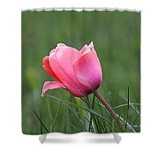 One Pink Tulip Shower Curtain